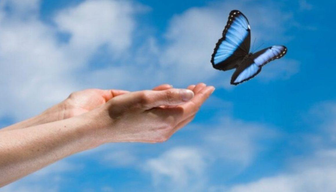 Libération d'un papillon